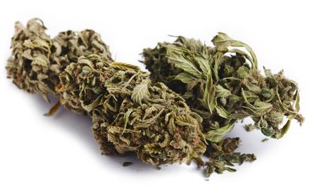 marihuana leaf: Dos brotes de cannabis que hab�an sido cultivadas por el proceso hidrop�nico, aislados en fondo blanco. Foto de archivo