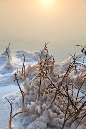 Its dawn at the famous Dead Sea in Israel. Salt clusters grouped on the remains of a withered bush break the orange hues reflected in the calm shallow waters. photo