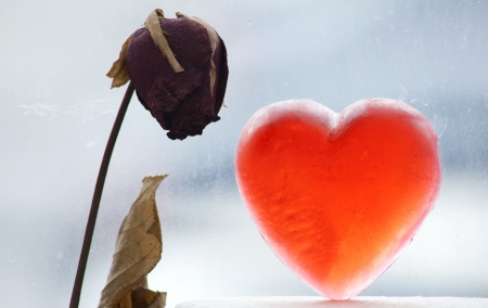 A dry rose and backlit heart shaped soap on wintery window background. photo