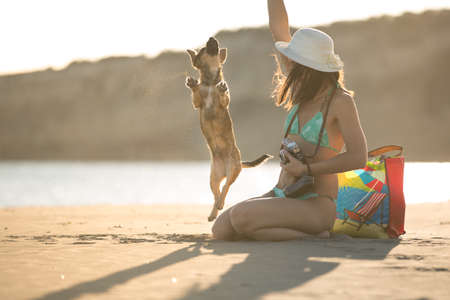 Young woman playing with dog pet on beach during sunrise or sunset.Hipster girl and dog having fun on seaside.Cute neglected stay dog adopted by caring young woman.Dog jumping.Dog training Stock Photo
