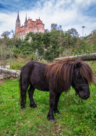 covadonga: Small pony resting with the Basilica of Covadonga in the background