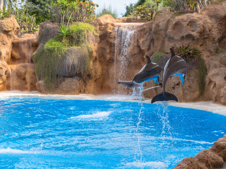 Back side of a Couple of dolphins jumping in a park show  Stock Photo - 26548355