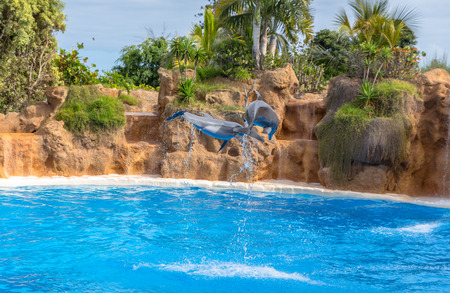 Couple of dolphins jumping around in a pool  photo