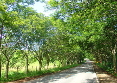 Road path of trees photo