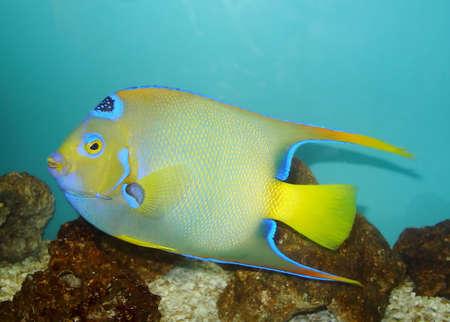 Colored fish in close Stock Photo - 626729