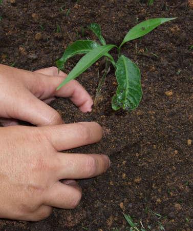 plantando un arbol: La plantaci�n de un �rbol con las manos sucias  Foto de archivo