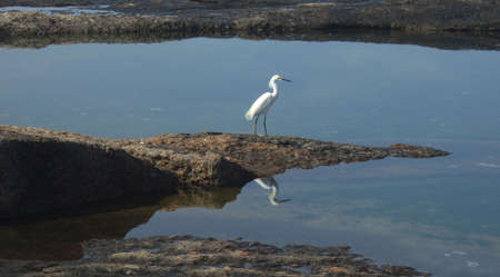 observe: Seagull and its reflection on the water, in Rio de Janeiro, Brazil