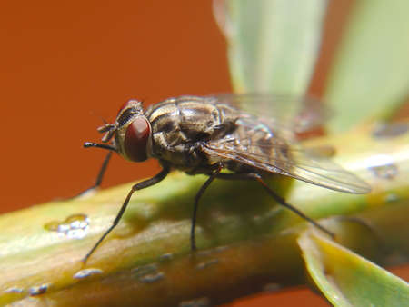 Isolated fly, landed on a branch of a plant Stock Photo - 1355899