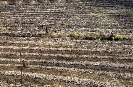 sugar land: Burning land in sugar cane harvest Stock Photo