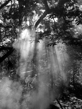 lugubrious: Fog over the branches of the tree Stock Photo