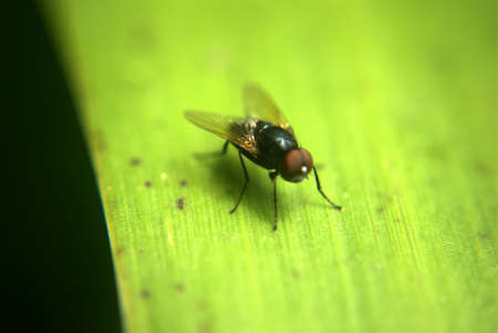 Isolated fly, landed on plant leaf Stock Photo - 5690200