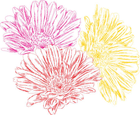 Hand-painted drawing of 3 blooming gerberas in yellow, red and pink