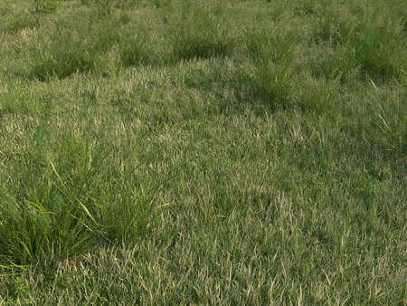 Green Yellow Grass  Stock Photo - 14745935
