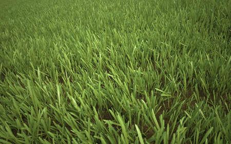 Green Yellow Grass