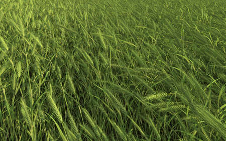 Green Yellow Grass  Stock Photo - 14745934