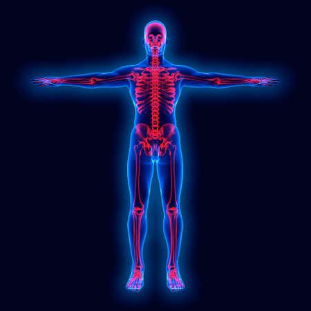 chest x ray: Human anatomy on xray