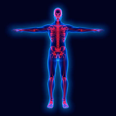 huesos humanos: La anatomía humana en xray