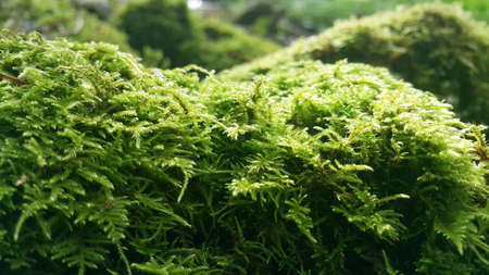 Moss on the rock in the forest