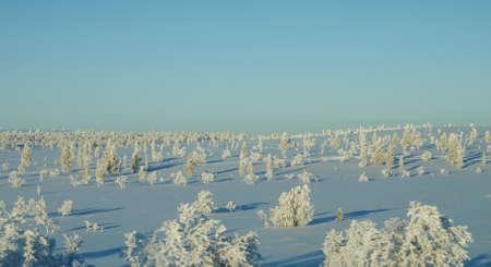 the taiga: Winter in taiga
