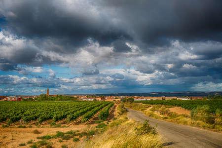 Weinberglandschaft im Sommer in Spanien