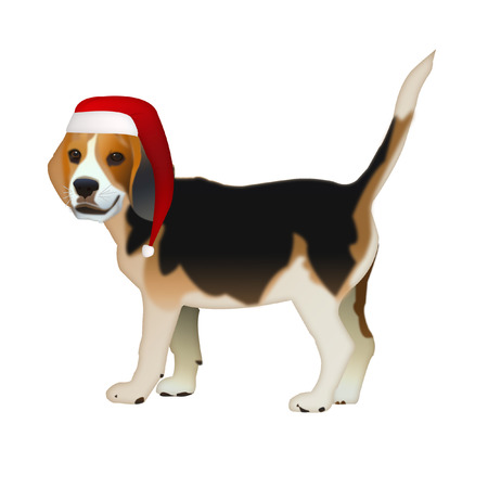 breeds: The dog is standing on a white background. Dog Beagle in Santa Claus hat. Stock Photo