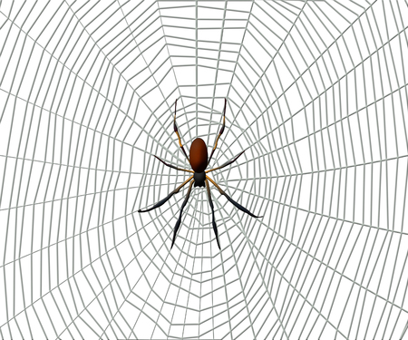 Spider on a spider web on white background. Stock Photo