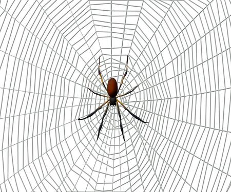 Spin op een spinnenweb op witte achtergrond.