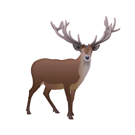 Isolated reindeer with antlers worth. illustration of reindeer on a white background Stock Photo
