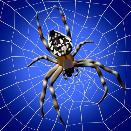 Spider web. Illustration of spider with spider web on blue background Stock Photo