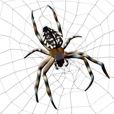 Spider web. Illustration of spider with spider web on white background.