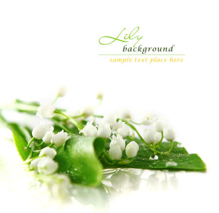 valley's: Lily of the valley Stock Photo