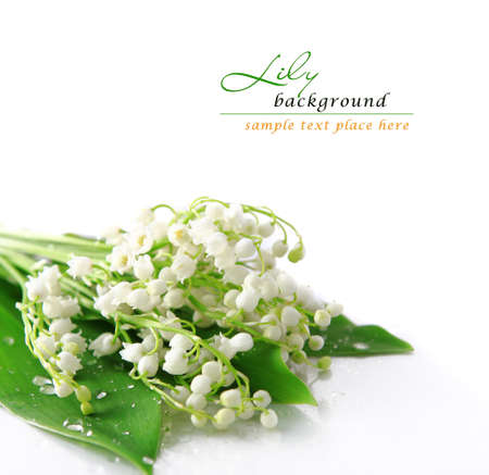 may lily: Lily of the valley Stock Photo
