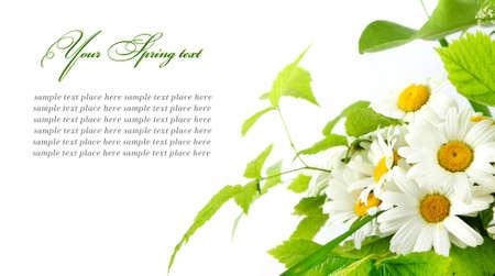 デイジーの花の白の背景の選択的 DOF 写真素材