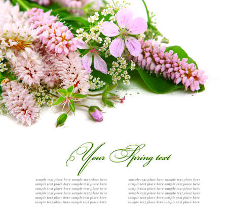 Bouquet of wild flowers on a white background  photo