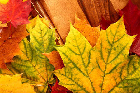Autumn leaves Stock Photo - 15541983