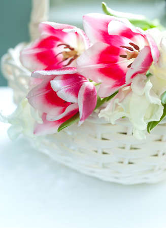 Tulip flowers in white basket photo
