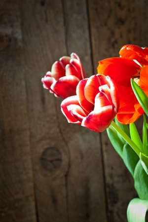 Tulip flowers in wooden background photo