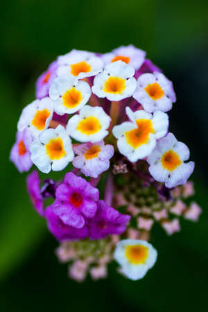 Fleurs au premier plan avec macro technique