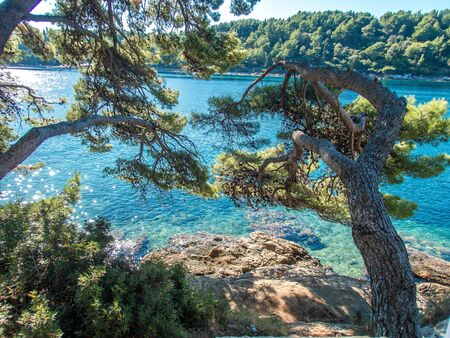 Stock photo of the views of the sea behind a pine grove in Cavtat, Croatia. Travel concept Reklamní fotografie