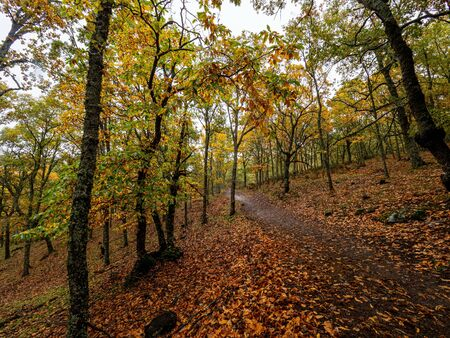 Stock photo of a path in the middle of the chestnut forest with the dry leaves on the ground Reklamní fotografie