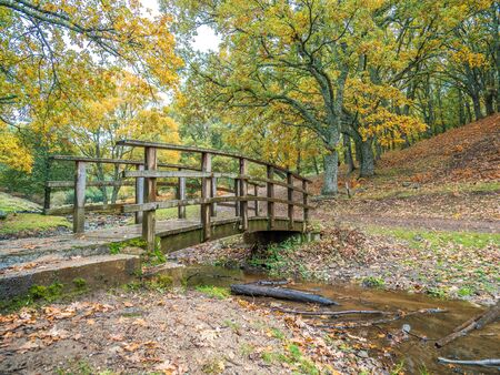 Stock photo of a wooden bridge crossing a stream in the middle of a chestnut forest with dry leaves on the ground Reklamní fotografie