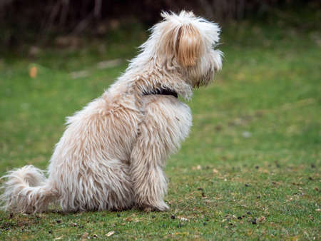 Side view of puppy sitting in the park. Shaggy puppy sitting on the grass. Foto de archivo