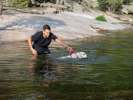 Dog handler holding by the leash teaching puppy to swim in lagoon. White puppy learning to swim in a lake.