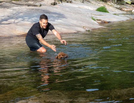 Dog trainer teaching to woolly puppy to swim in a lagoon. Brown puppy learning to swim in a lake.