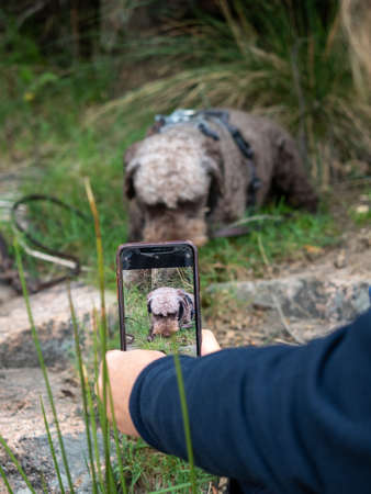 Unrecognizable person photographing woolly dog in the meadow. Person taking picture of his shaggy pet.