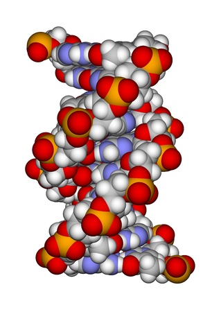 Part of a DNA double helix
