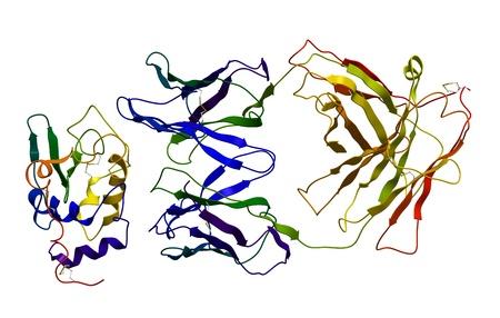 immunoglobulin: Immunoglobulin bound to antigen Stock Photo