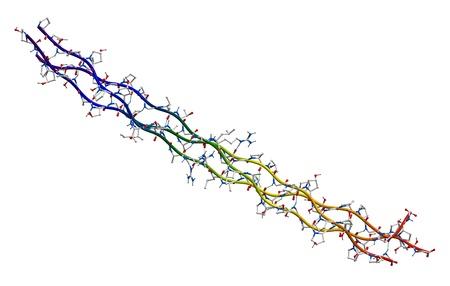 segment: Segmento di collagene umano