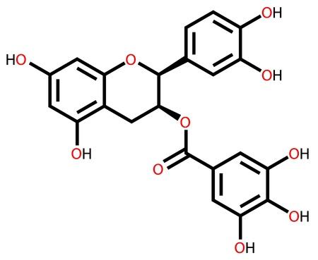 enlaces quimicos: Epicatequina galato, un flavonoide natural que se encuentra en las plantas Vectores