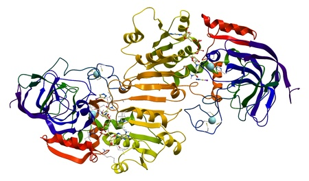 Human alcohol dehydrogenase (ADH1A) model photo